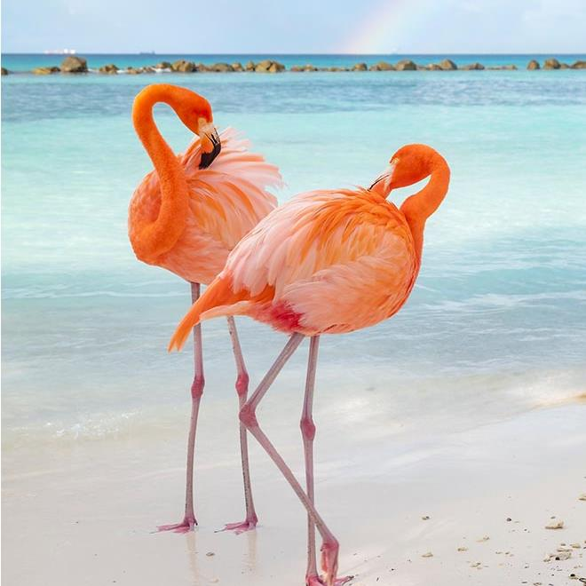 Bu görsel boş bir alt niteliğe sahip; dosya adı caribbean-highlights-wildlife.ashx